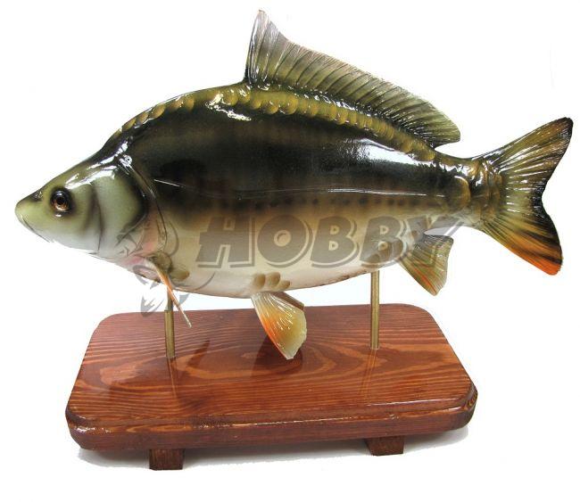 trofej kapor zavesiteľný na stenu 34cm rybárske a poľovnícke